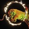 Цирки в Донецке